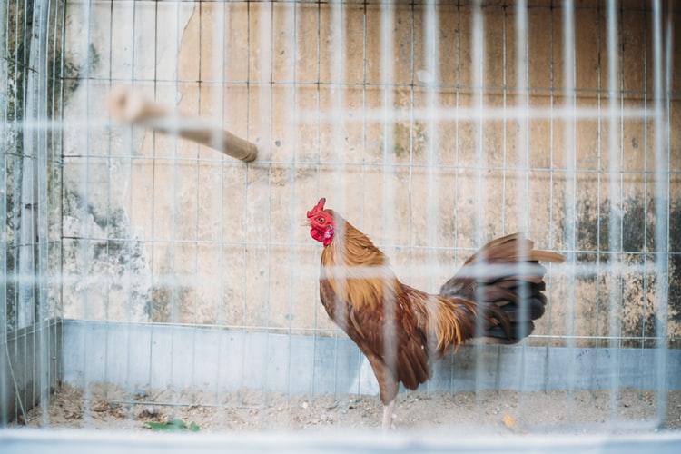 Оформление документов для птицефермы