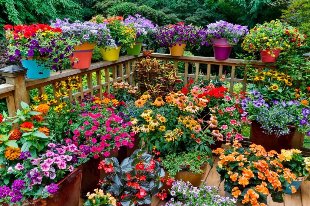 бизнес на выращивании цветов на дому