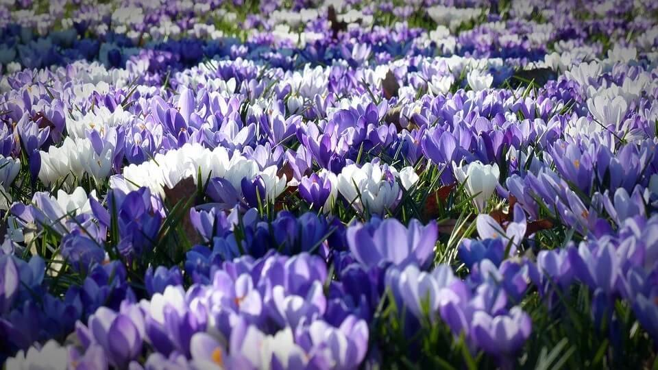 выращивание цветов в открытом грунте