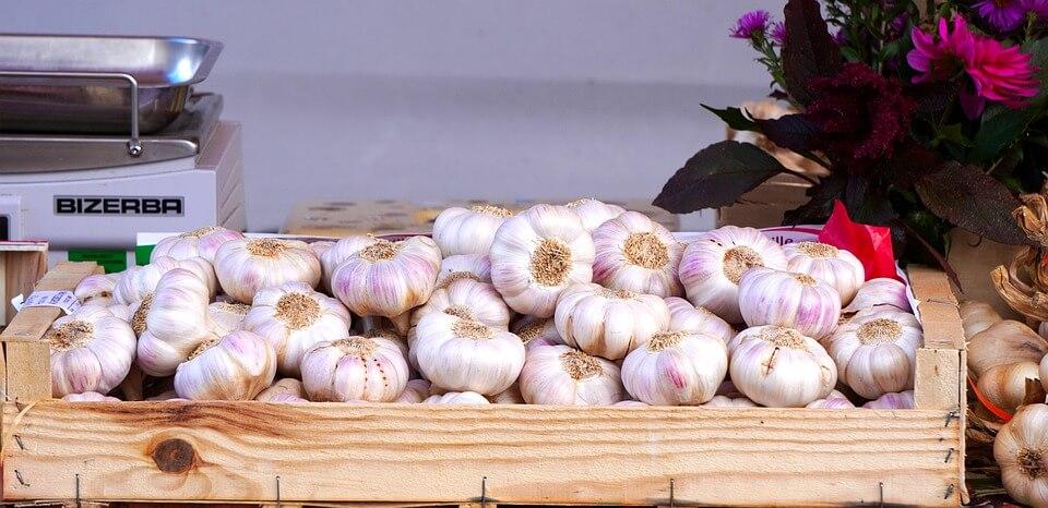 Бизнес на выращивании чеснока