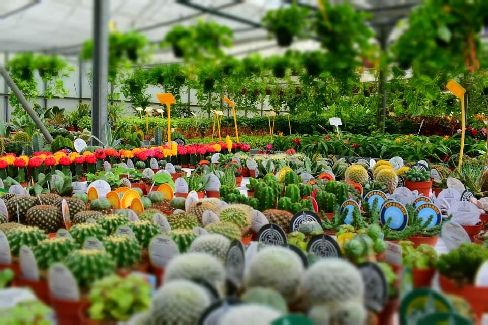 бизнес план питомник растений